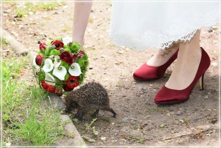 Hochzeitsfotografin, Landkreis Uelzen, Landkreis Gifhorn, Wittingenn